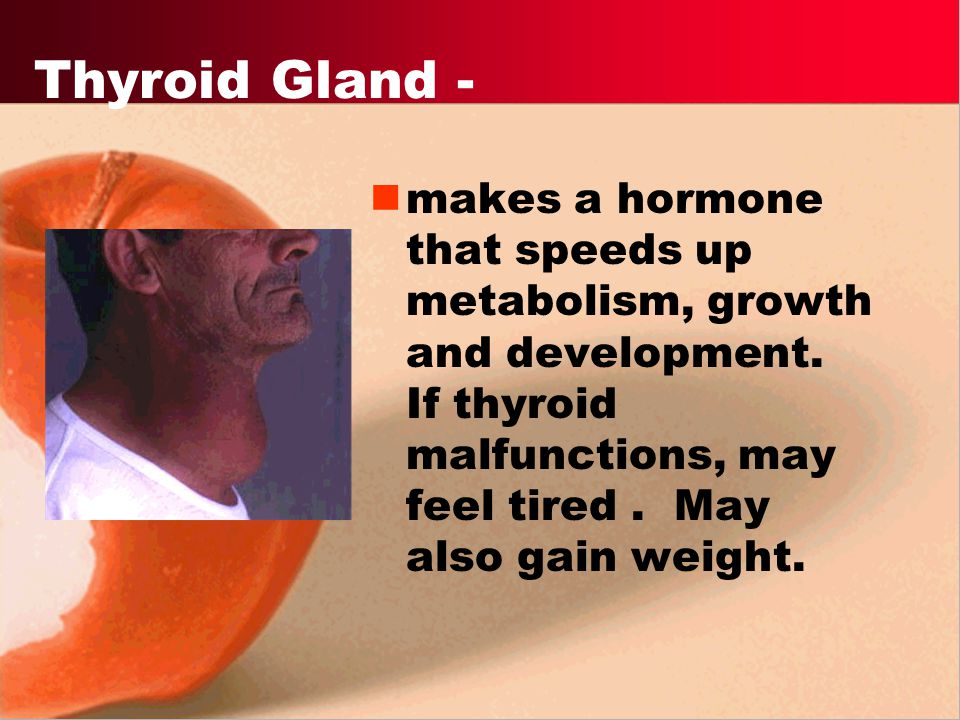 Thyroid Gland - makes a hormone that speeds up metabolism, growth and development.
