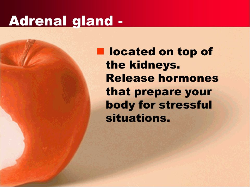 Adrenal gland - located on top of the kidneys.
