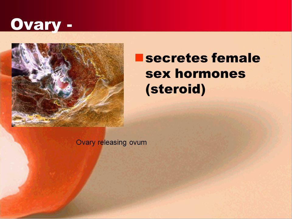 Ovary - secretes female sex hormones (steroid) Ovary releasing ovum
