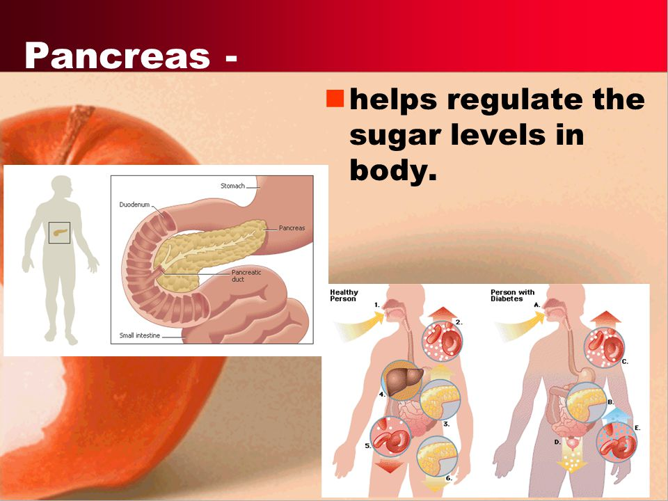 Pancreas - helps regulate the sugar levels in body.