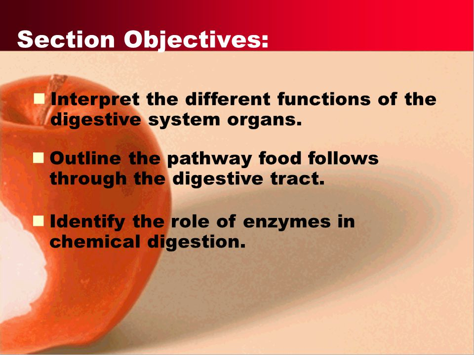 Section Objectives: Interpret the different functions of the digestive system organs. Outline the pathway food follows through the digestive tract.