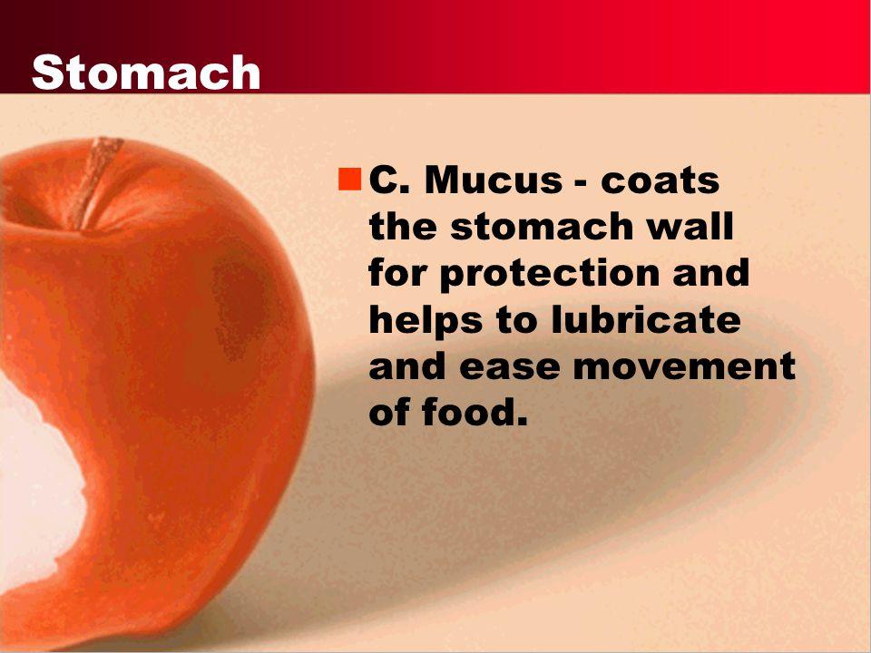 Stomach C.