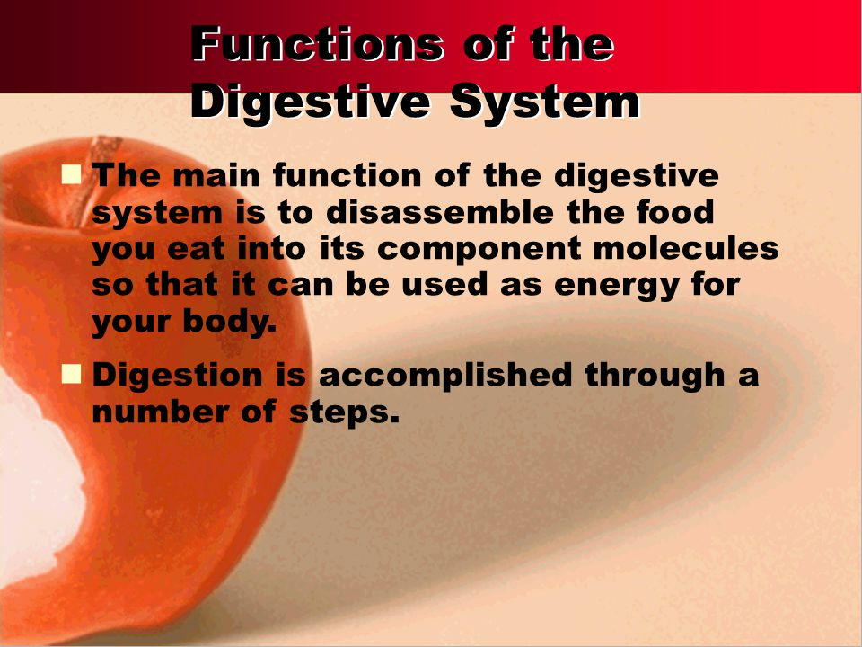 Functions of the Digestive System