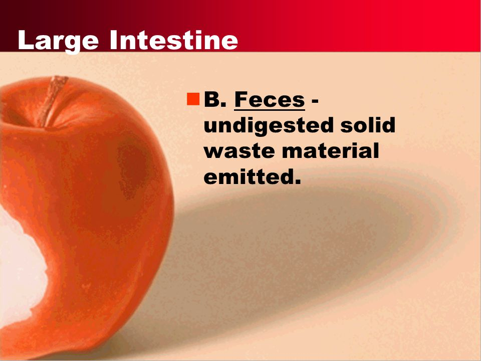 Large Intestine B. Feces - undigested solid waste material emitted.