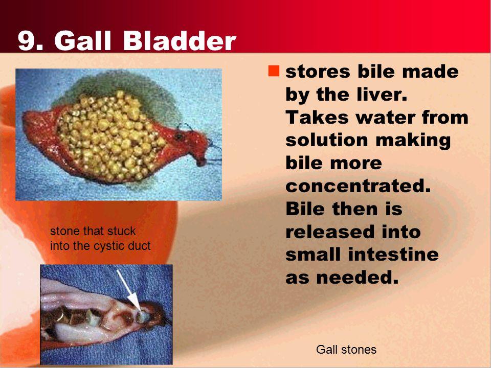 9. Gall Bladder