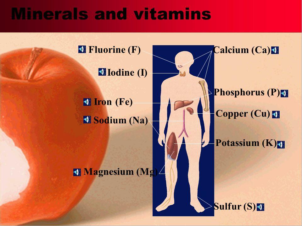 Minerals and vitamins Fluorine (F) Calcium (Ca) Iodine (I)