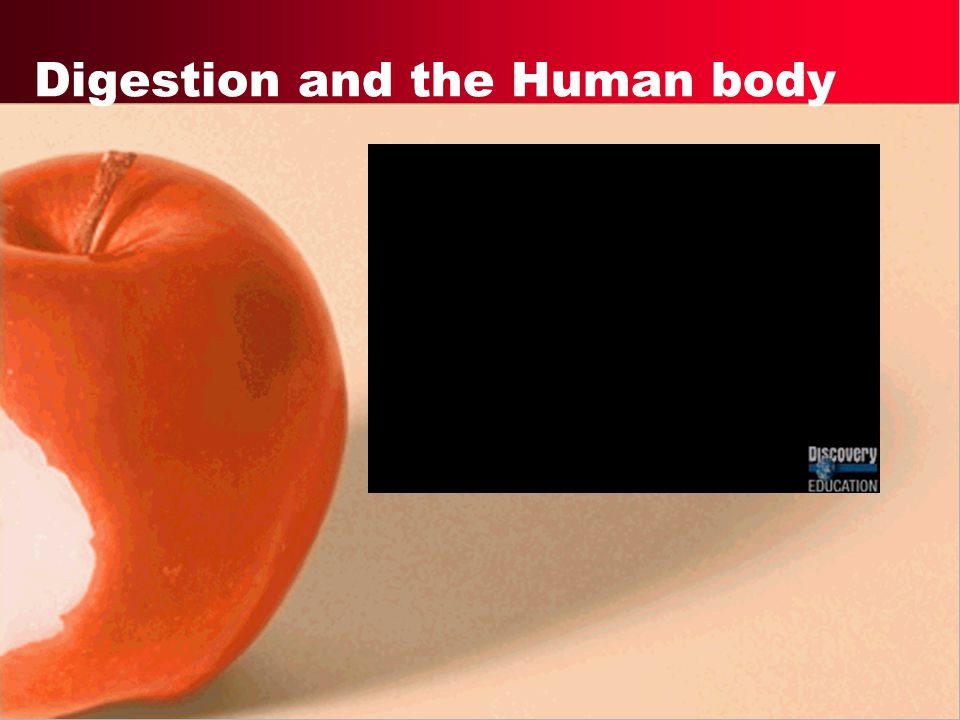 Digestion and the Human body