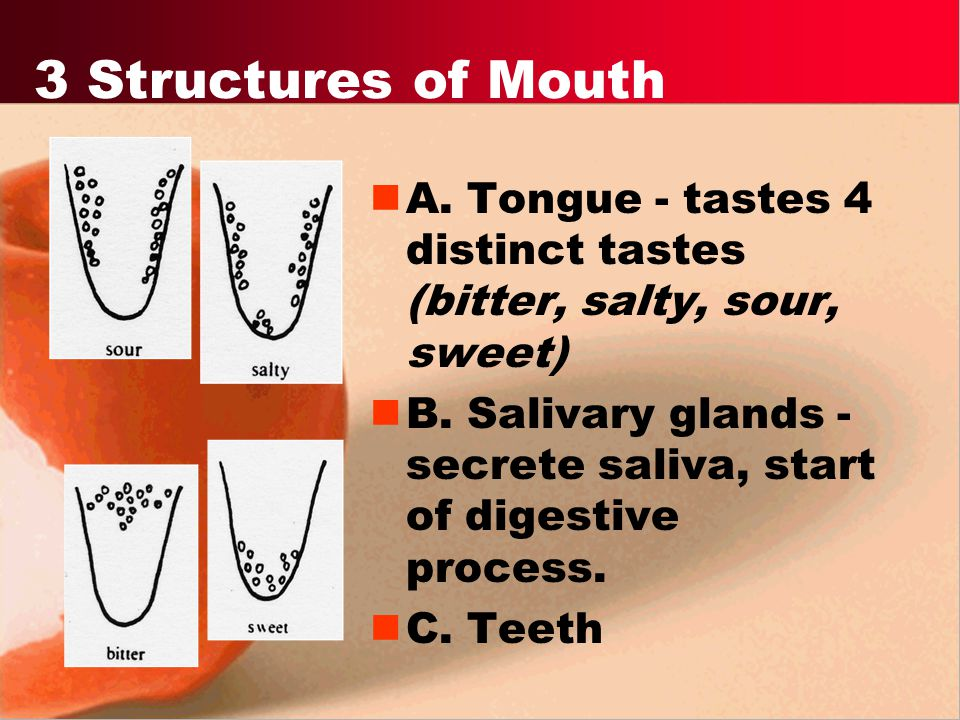3 Structures of Mouth A. Tongue - tastes 4 distinct tastes (bitter, salty, sour, sweet)