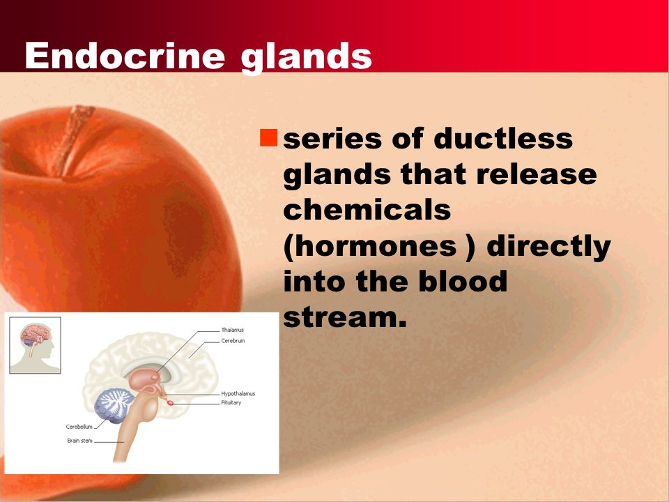 Endocrine glands series of ductless glands that release chemicals (hormones ) directly into the blood stream.