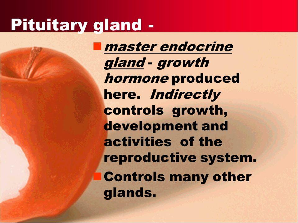 Pituitary gland -