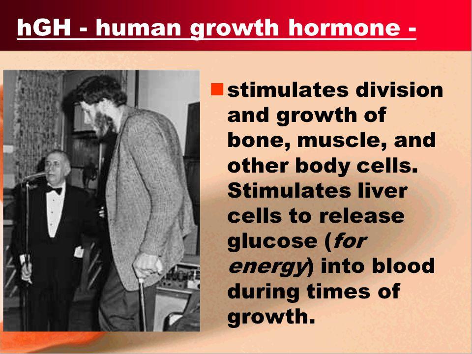 hGH - human growth hormone -