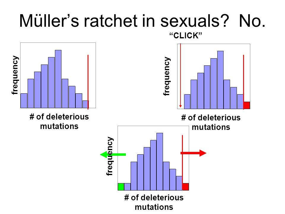Müller's ratchet in sexuals No.