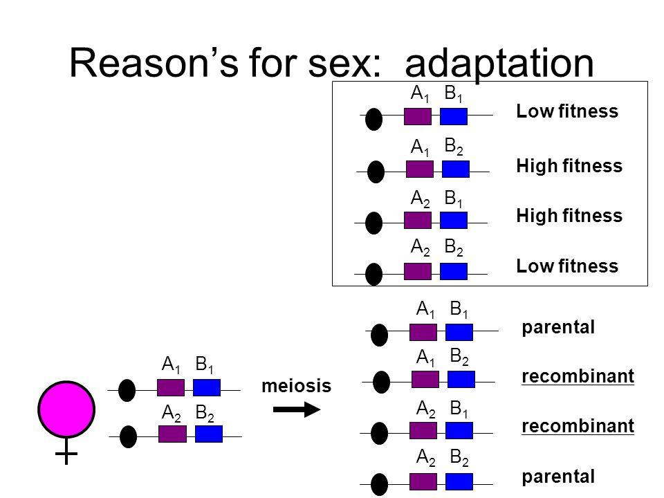 Reason's for sex: adaptation