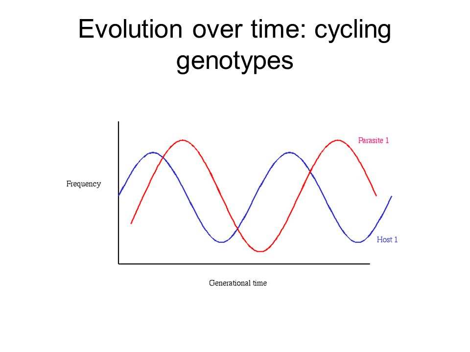 Evolution over time: cycling genotypes