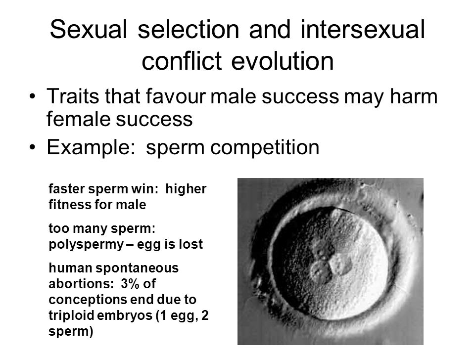 Sexual selection and intersexual conflict evolution