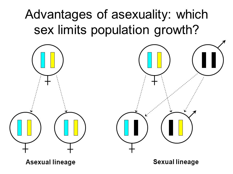 Advantages of asexuality: which sex limits population growth