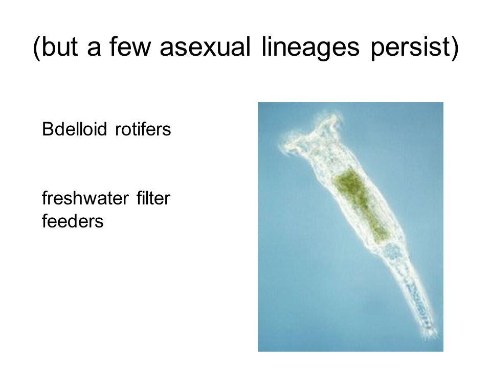 (but a few asexual lineages persist)