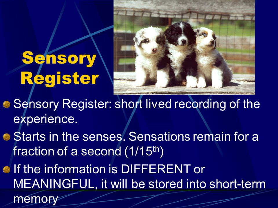 Sensory Register Sensory Register: short lived recording of the experience.
