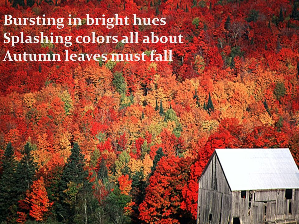 Bursting in bright hues Splashing colors all about Autumn leaves must fall