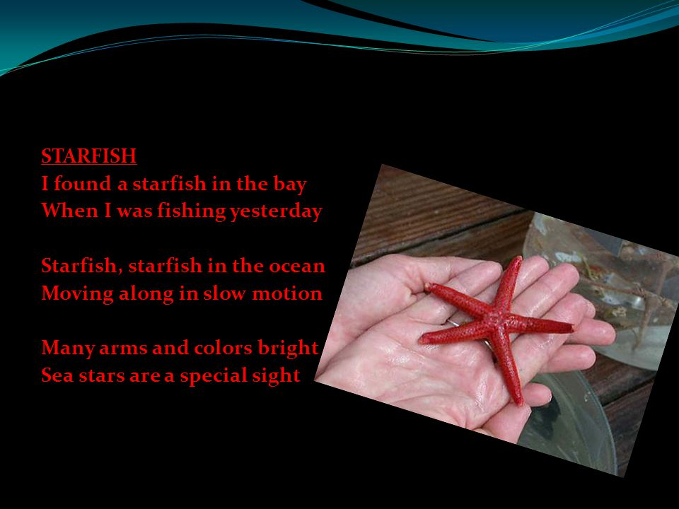 STARFISH I found a starfish in the bay When I was fishing yesterday Starfish, starfish in the ocean Moving along in slow motion Many arms and colors bright Sea stars are a special sight