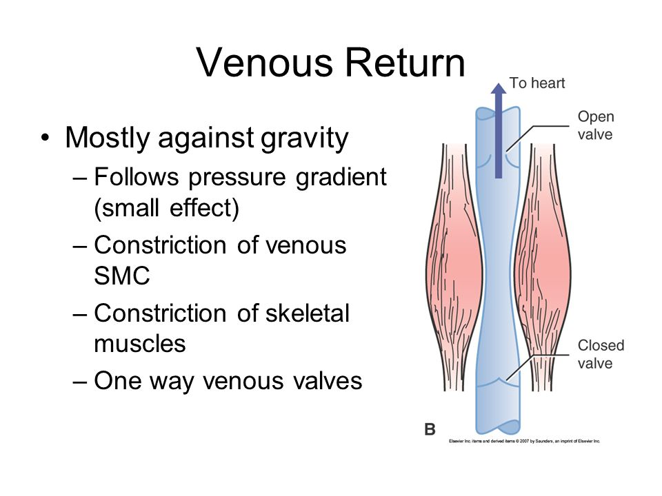 Venous Return Mostly against gravity
