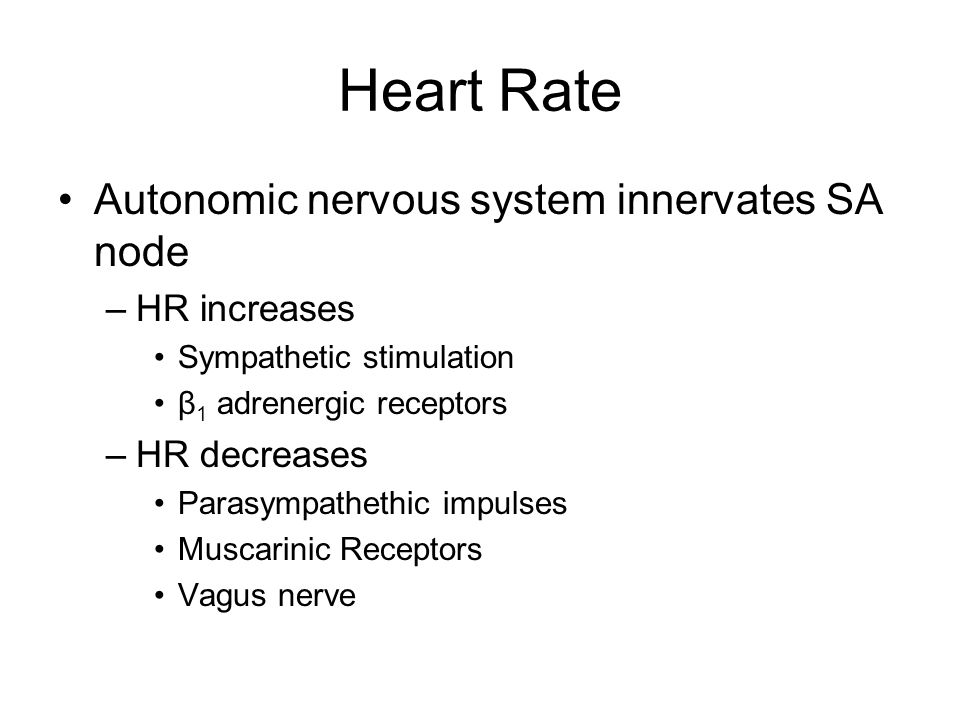 Heart Rate Autonomic nervous system innervates SA node HR increases