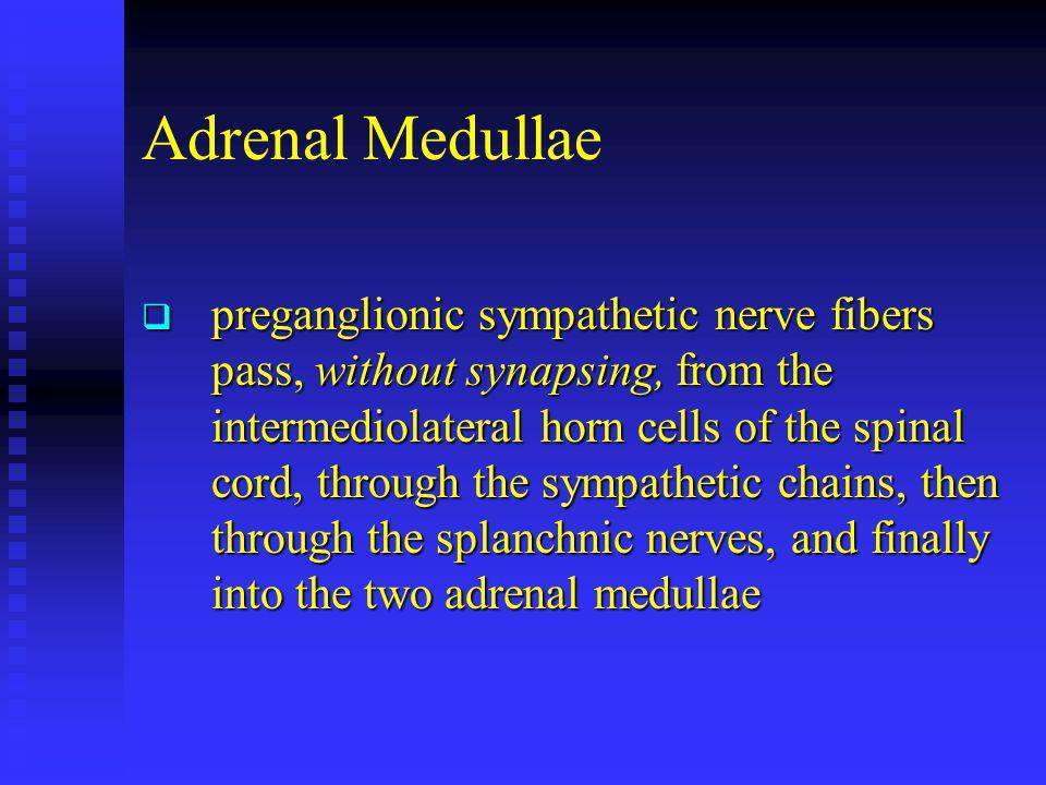 Adrenal Medullae