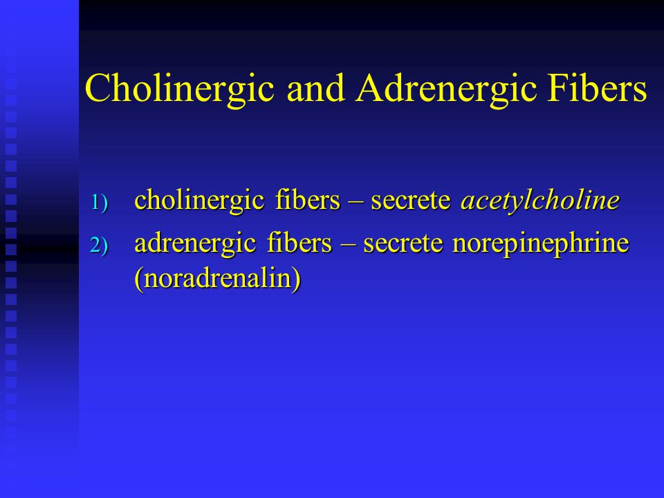 Cholinergic and Adrenergic Fibers