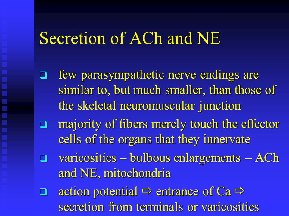 Secretion of ACh and NE few parasympathetic nerve endings are similar to, but much smaller, than those of the skeletal neuromuscular junction.