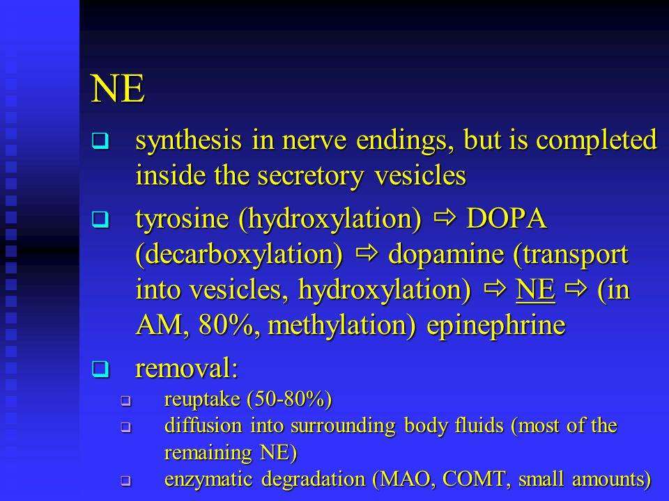 NE synthesis in nerve endings, but is completed inside the secretory vesicles.