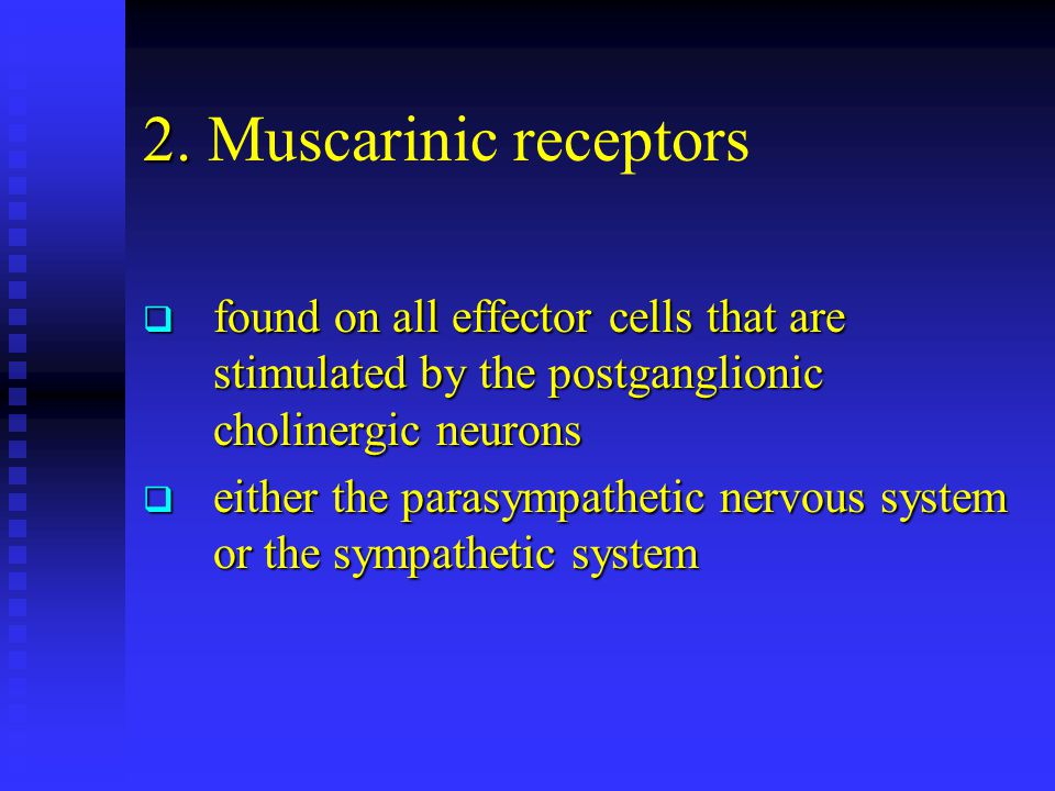 2. Muscarinic receptors found on all effector cells that are stimulated by the postganglionic cholinergic neurons.