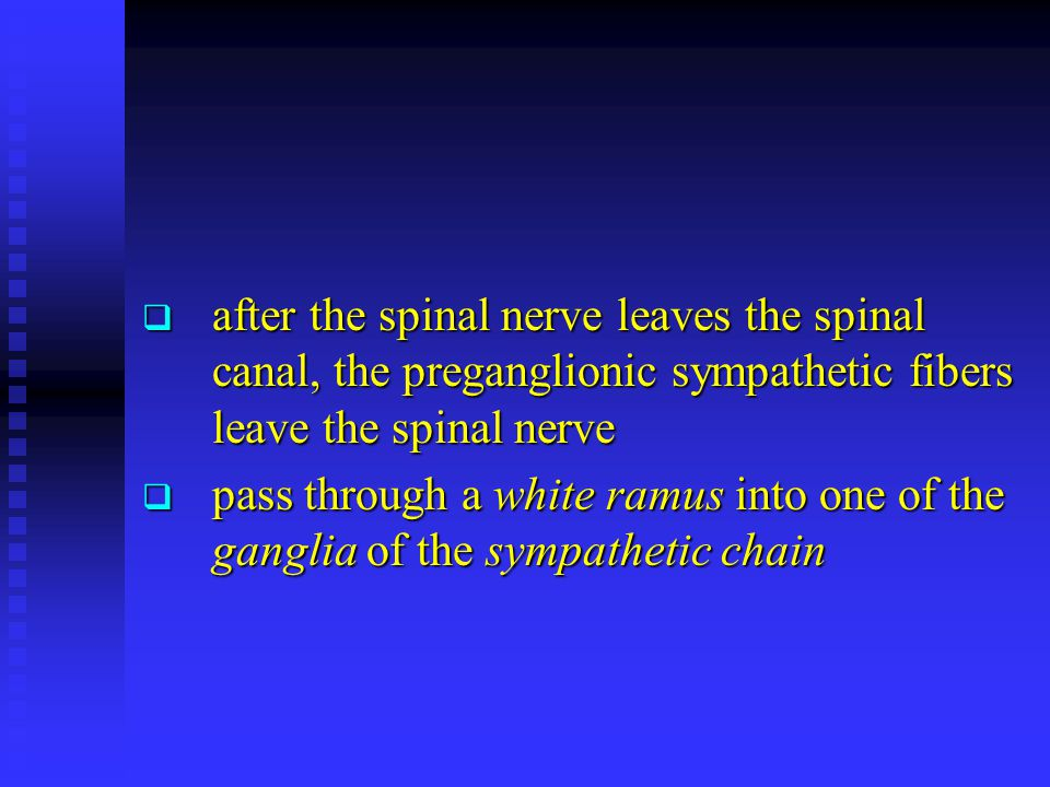 after the spinal nerve leaves the spinal canal, the preganglionic sympathetic fibers leave the spinal nerve