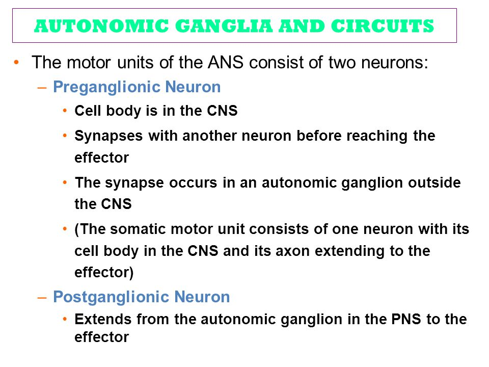 AUTONOMIC GANGLIA AND CIRCUITS