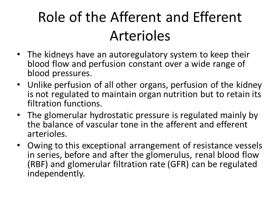 Role of the Afferent and Efferent Arterioles