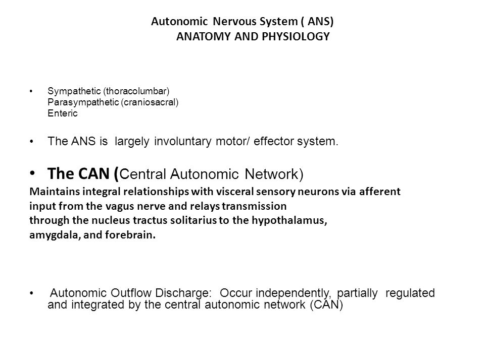 Autonomic Nervous System ( ANS) ANATOMY AND PHYSIOLOGY