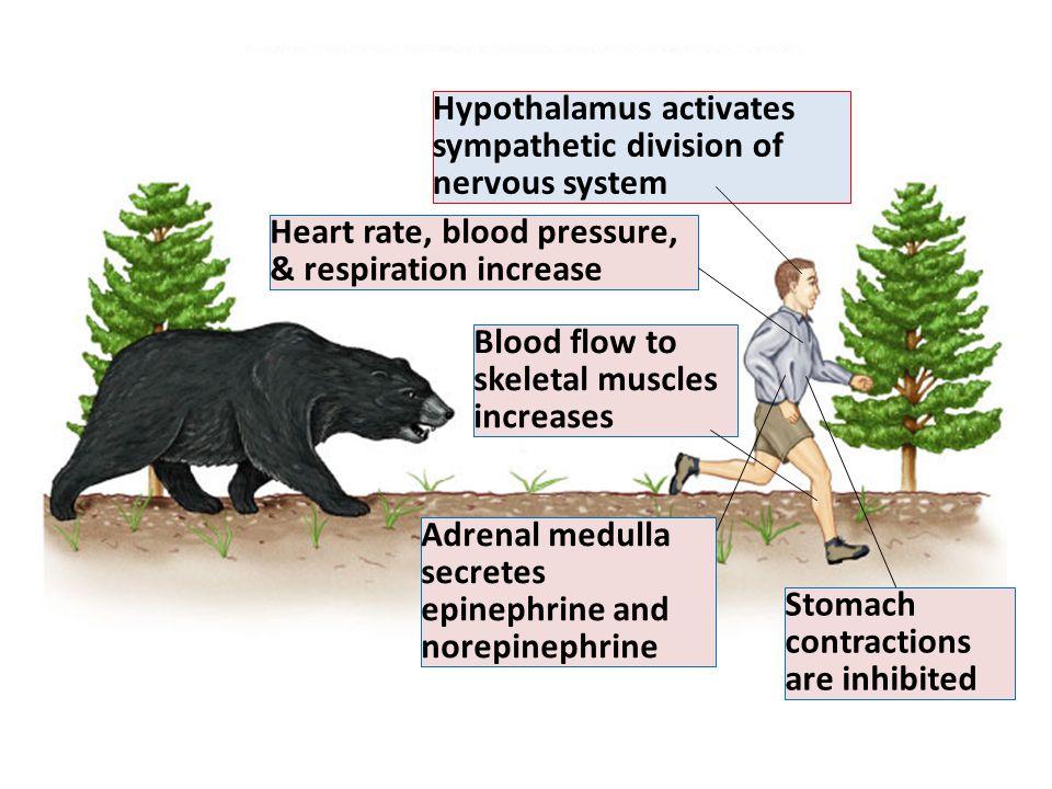 Fig. 45.34(TE Art) Hypothalamus activates sympathetic division of