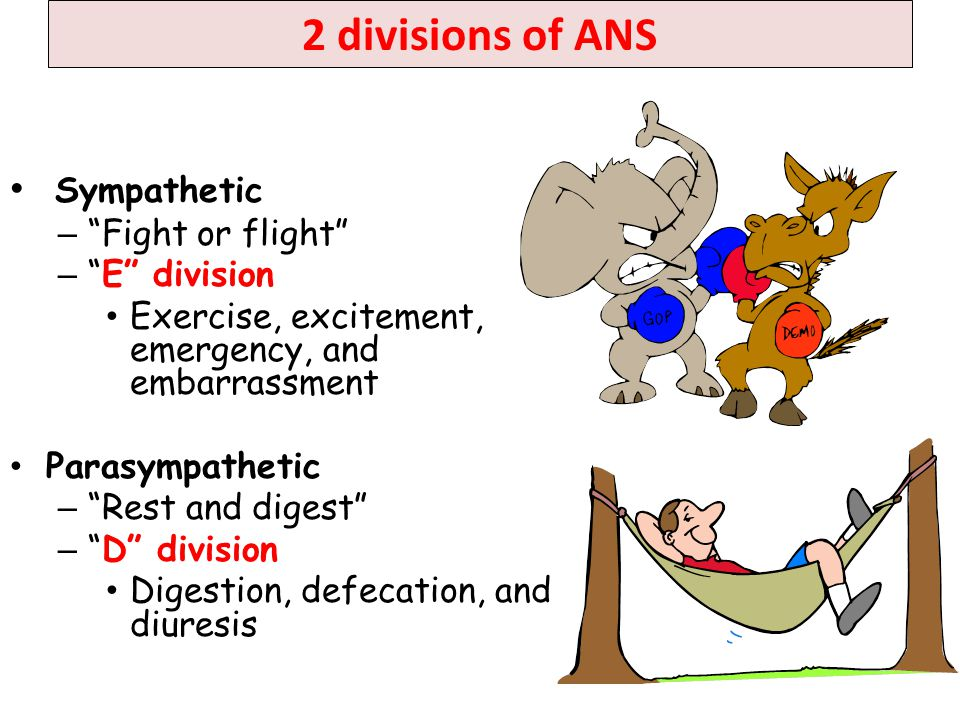 2 divisions of ANS Sympathetic Fight or flight E division
