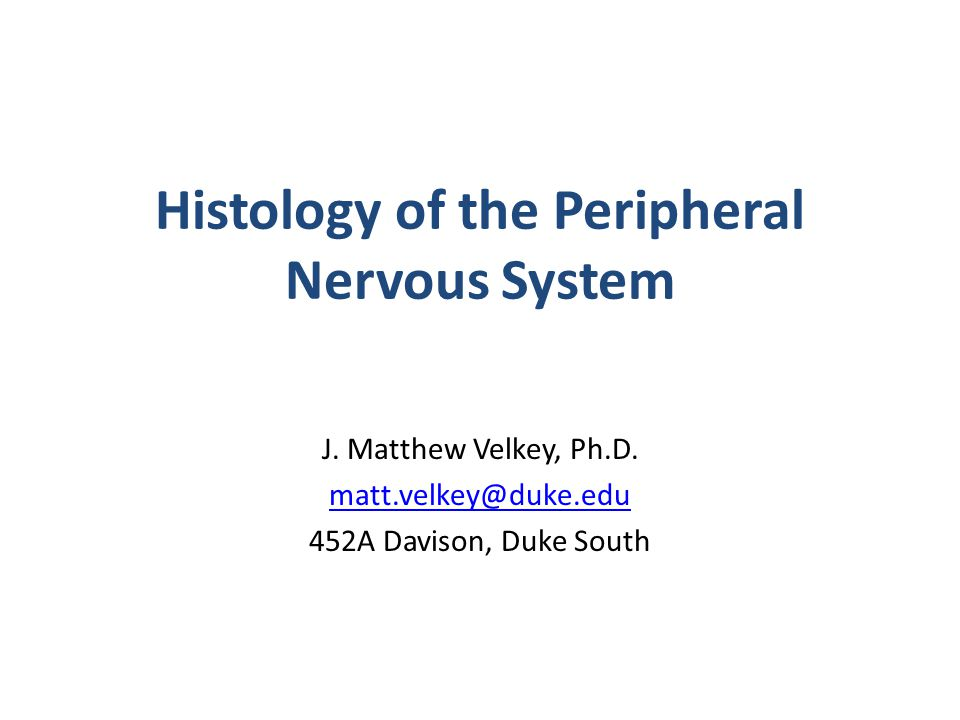 Peripheral Nervous System Histology Lecture 2004 Michael Hortsch