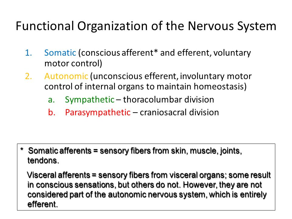 Functional Organization of the Nervous System