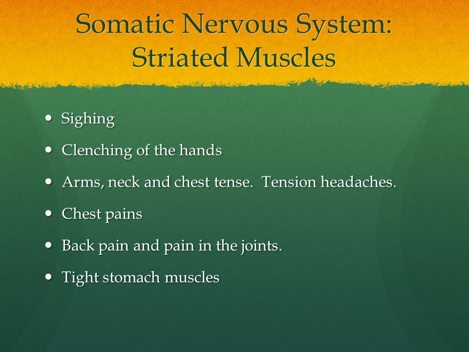 Somatic Nervous System: Striated Muscles
