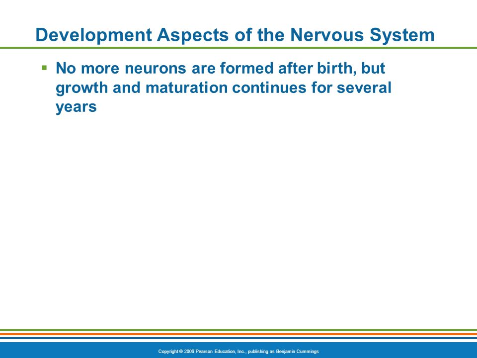 Development Aspects of the Nervous System