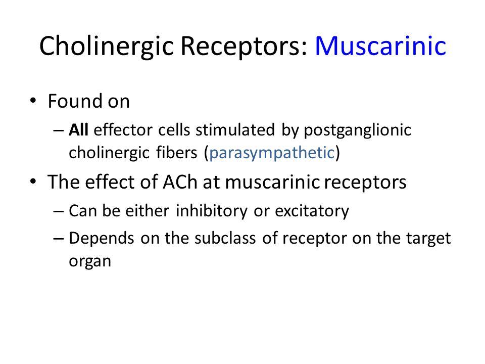 Cholinergic Receptors: Muscarinic