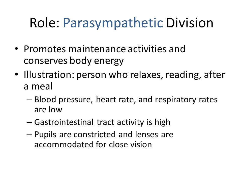 Role: Parasympathetic Division