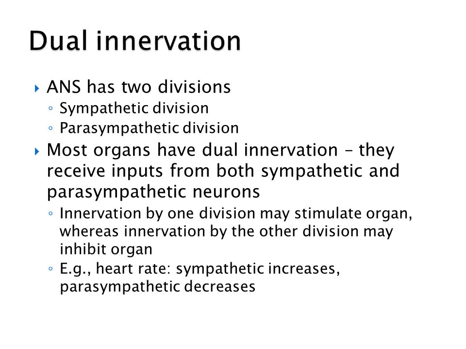 Dual innervation ANS has two divisions