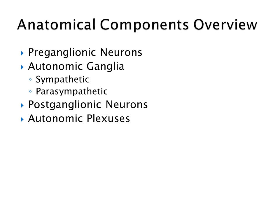 Anatomical Components Overview