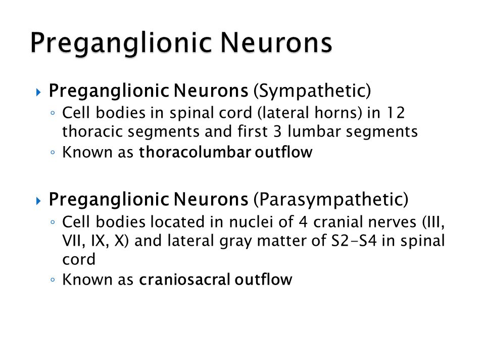Preganglionic Neurons