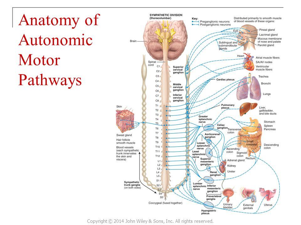 Ausgezeichnet Bilder Von Kadavern Für Anatomie Ideen - Anatomie ...