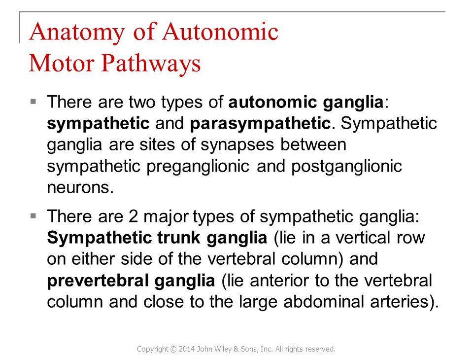 Anatomy of Autonomic Motor Pathways