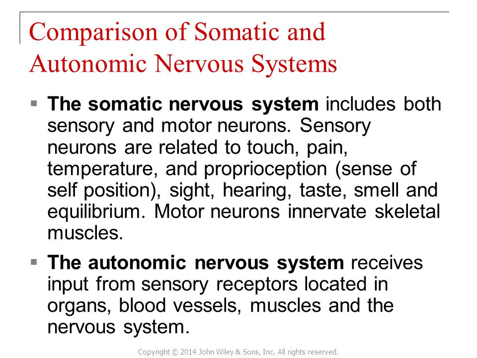Comparison of Somatic and Autonomic Nervous Systems