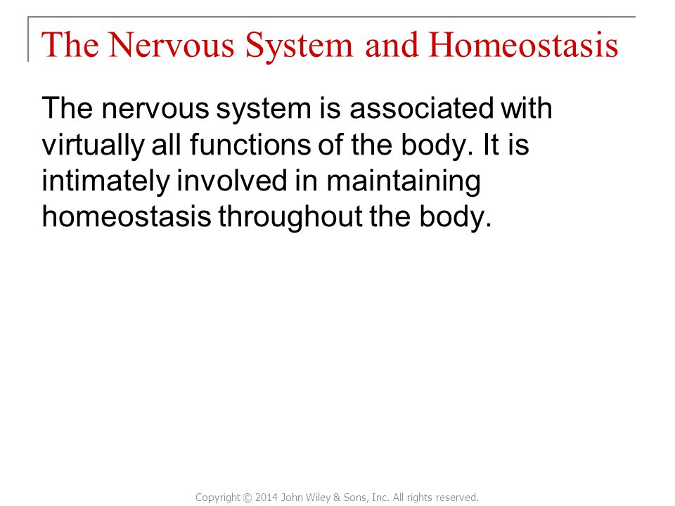 The Nervous System and Homeostasis